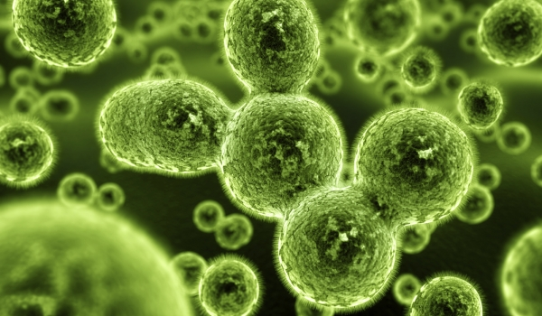 The Dangers Of Mold