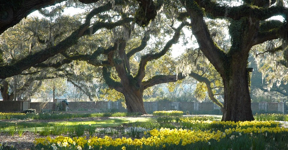 Spring at Brookgreen Gardens