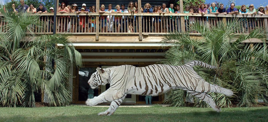 5 Incredible Animal Experiences in Myrtle Beach For the Entire Family